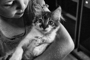 Cat Adoptions @ Petco