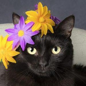 Black Cat Appreciation Day @ Southeast Volusia Humane Society
